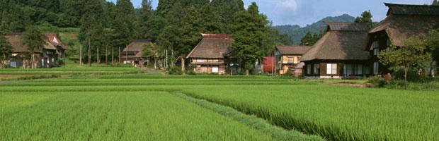 金シャリ玄米屋